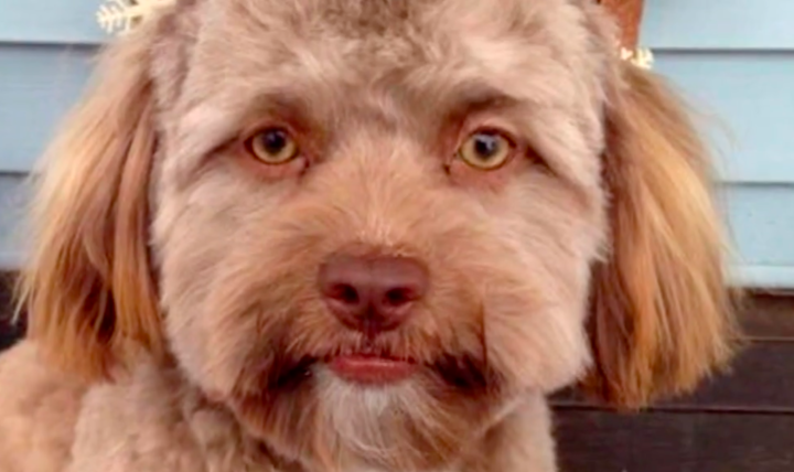 This Puppy's Eerie Human-Like Face Is Freaking Everyone On